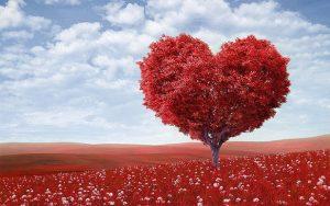 arbre en coeur planetaiire